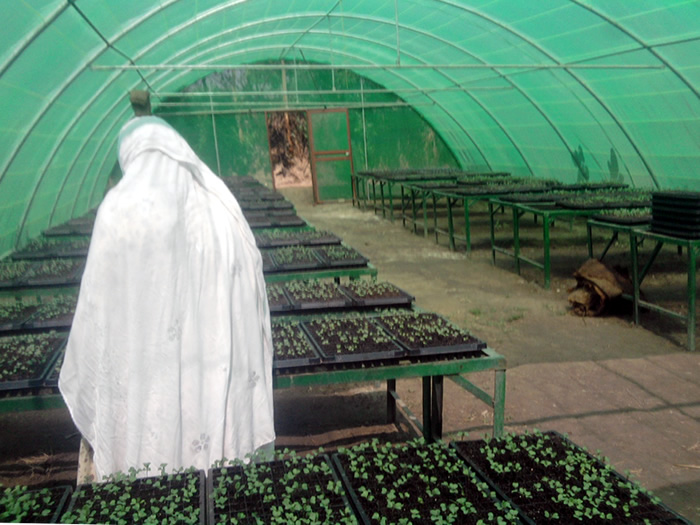 The Ladies' Greenhouse Success Story