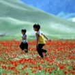 boys in poppy field
