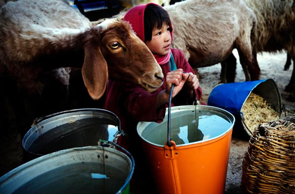 young girl with water and goat