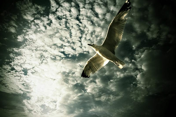 white-bird-on-clouds