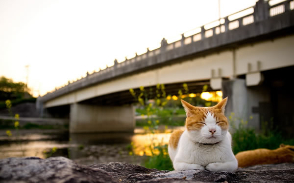 cats near bridge