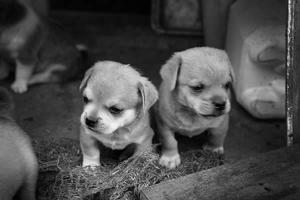 two-puppies