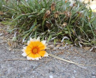 Flower on the Ground