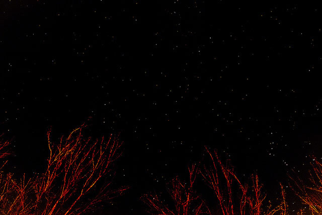 starry-night-red-trees