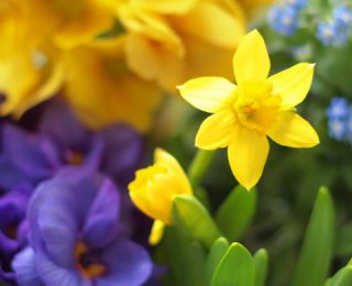 Hope for Spring in Our Hearts