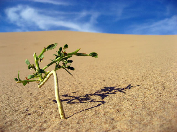lonely-plant-in-desert